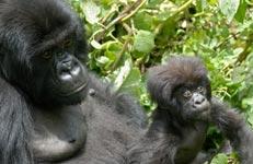 Uganda - A visitors guide