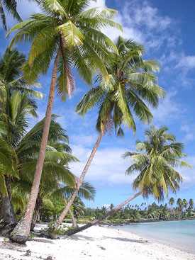 Retur to paradise beach samoa
