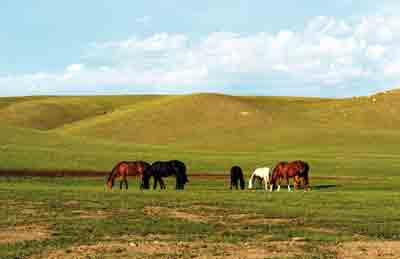 South Dakota Horses