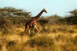 Africa romantic destinations