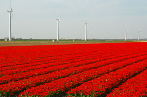 Holland Flower Route