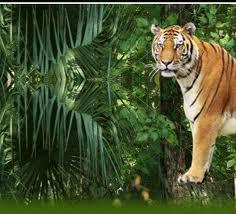 Chitwan Jungle Safari, adventure, wildlife tour, nepal tour, online booking