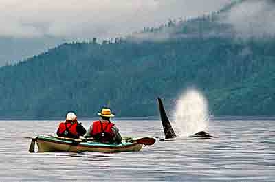 Orca Whales, British Columbia
