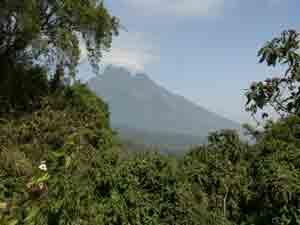 Rwanda Gorilla Trekkiing