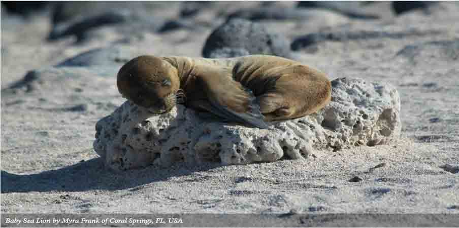 Galapagos Islands - A Visitors Guide