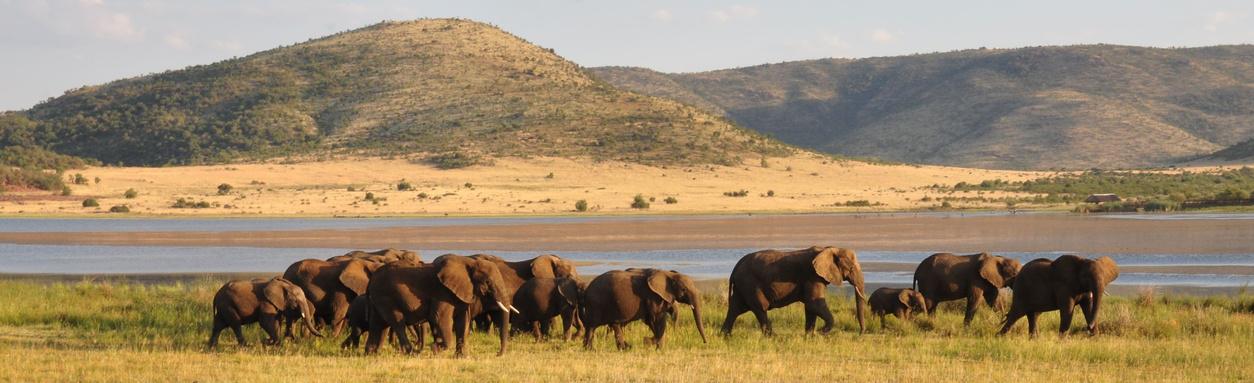 Wildlife Safari Destinations